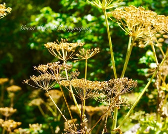 Green and Gold, Photography, Home Decor