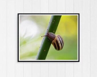 Snail gift, Woodland Print, Woodland Nursery Decor, Printable Instant Digital Download, Large Poster, Woodland Snail art, Snail Print