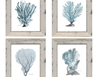 Set of 4 Pale Blue Coral Prints with Discount. Coastal Home Wall Decor on Archival Watercolor Paper. Antique Images