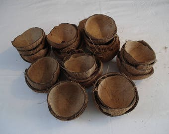 Set of 32 traditional breaking coconut halves