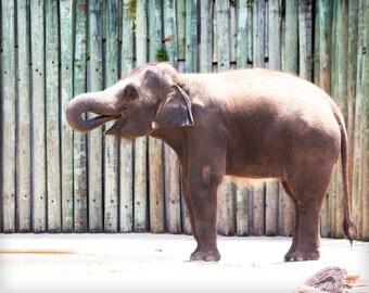 Elephant Photo - 8x10 photograph - Thirsty Elephant - fine art print -  baby elephant - nature print - nursery art - fathers day