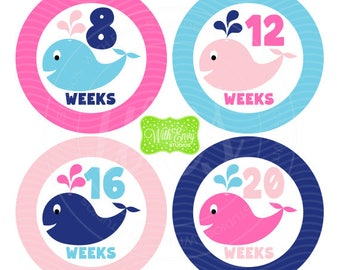 Whale Pregnancy Stickers - Whale Stickers - Pregnancy Growth Stickers - Baby Bump Stickers - Pink and Blue Baby Stickers