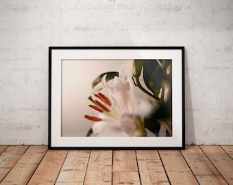 Oh Lily II | Botanical | Flower | Photo Print