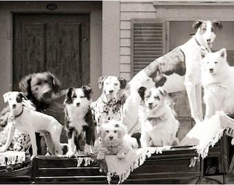 Vintage Photo Print 12 Dog Caravan Circus  Ride in Wagon 1900 Poodle Collie Dalmation Jack Russell Labrador