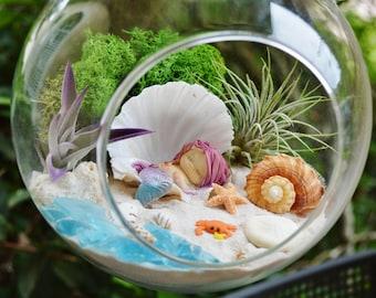 """Little Mermaid Beach Terrarium Kit ~7"""" Air Plant Terrarium Kit ~ Coastal Living Beach Decor ~ Sleeping Mermaid in Shell ~ Mermaid Gift"""