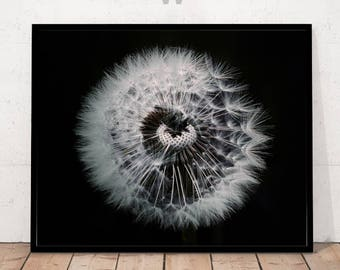 Dandelion Print, Black and White Photography, Minimalist Photography, Photography, Flower Print, Dandelion Art, Flower Photography, Wall Art