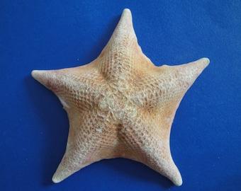 "Seashells Sea Shell 4.5"" Bat Starfish"