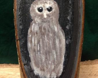Florida Barred Owl