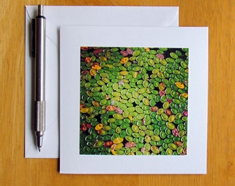 Watershield Card, Water Plant Card, Photo Note Card, Nature Cards, Botanical Cards, Stationery, Notecards, Blank Cards, Plant Note Cards