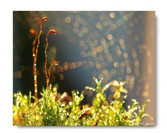 Blooming Moss Photograph Blooming Moss Print...Affordable Home Photography Prints Nature Photography Decor Nature Lover Woodland Scene