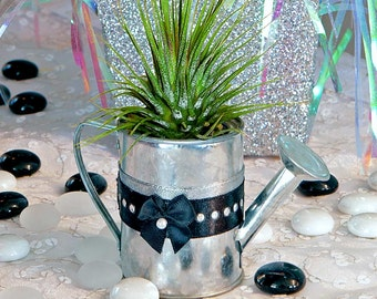 AULD LANG SYNE- party favor, hostess gifts, name card holder, holiday gift, watering can, air plant
