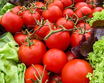 TOMATO SEEDS 'Porter Improved' Heirloom tomato  20+ seeds