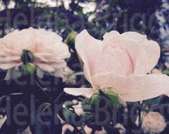 Blush Pink Decor, Blush Pink Home, Blush Pink Home Decor, Blush Pink Room Decor, Blush Pink Wall Decor, Blush Pink Flowers, Blush Pink Art