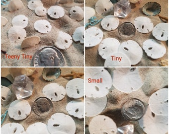 "Real Miniature Sand Dollars Tiny Extra Small 4 sizes under 1"" Dime Nickel Quarter DIY Jewelry Lockets Scrapbooking Wedding Invite Accents"