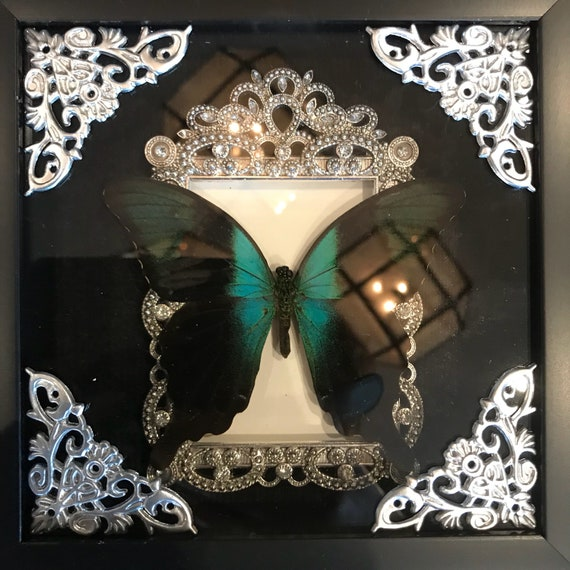 Beautiful green butterfly taxidermy display