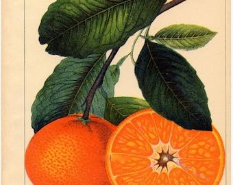 Flower art, Vintage print, Nature, Botanical art, Flower print, Wall decor, Nature art, Botanical, Flower print art, Antique print, 506