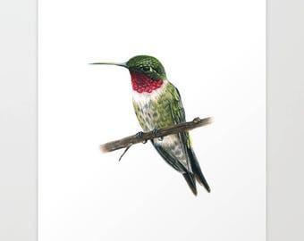 Ruby Throated Hummingbird Print