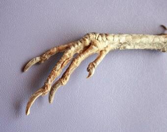 Decor - Talisman - Natural Chicken Foot Charm - Lucky Chicken Foot - Feet talisman - Natural Chicken Foot Charm