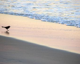 Bird on the surf