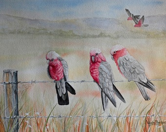 Galahs Painting, PRINT, Watercolour Painting, Home decor, Australian Art Galah painting, Australian outback, Fine Art Print, Free Shipping