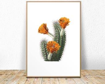 Blooming cactus print, blooming cacti, blooming succulent, cactus blossom art, cactus wall decor, printable cactus art, cactus botanical