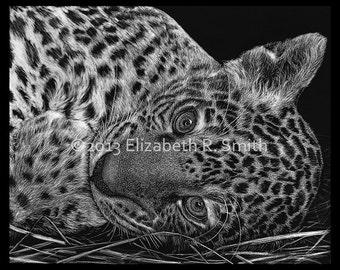 """Jaguar Cub Scratchboard 9"""" x 12"""" Print"""