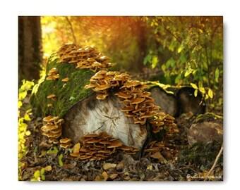 Pholiota Woodland Mushroom Scene Photograph Forest Scene Photography Prints Nature Photography Decor Nature Lover Woodland Scene