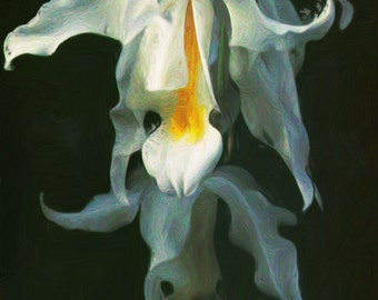 White Orchid - Digital Impressionist Painting - Digital Download