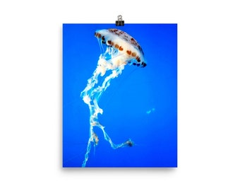 Jellyfish Poster, Sea Nettle Jellyfish wall decor, Jellyfish Decor