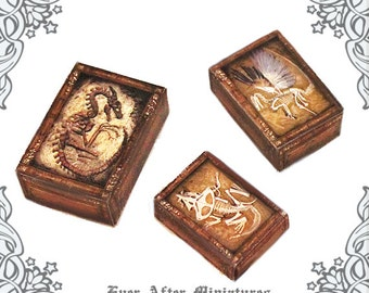 3 FANTASTIC BEASTS Fossils Miniature Display Case Set –1:12 Dragon Phoenix Tarasque Fossil Dollhouse Miniature Shadow Box Printable DOWNLOAD