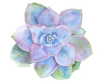 Blue Succulent Watercolor - 20 x 16 - Large Fine Art Print - Watercolor Painting