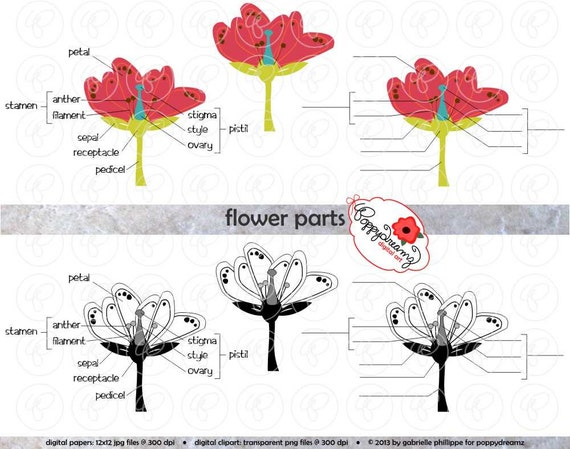 Blume Teile Wissenschaft Schema Clipart Set 300 dpi Schule