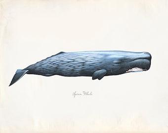 Vintage Sperm Whale Print 8x10 P229