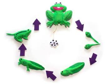 Life Cycle of the Frog Science Felt Set/Science Activity Board/Sensory Tool/Eco-Friendly/Ready to Ship