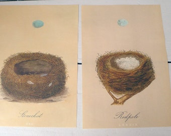 Set of Two Nest and Egg Prints
