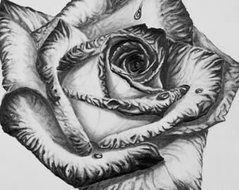 Rose Flower Art Drawing Print
