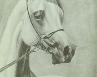 Draw animal portrait from photo, animal drawing by photo, Cat portrait, Horse Portrait, Dog portrait, pencil drawing
