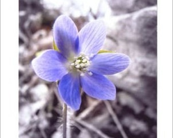 Blue Flower Photo Note Cards - Set of TEN