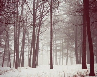 Nature Photography Winter Art: Fog and Snow, Fine Art Photography Winter Tree Wall Art Forest Landscape Photography Winter Print, Wall Art