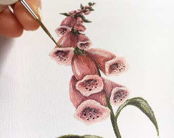 Original Foxglove Painting