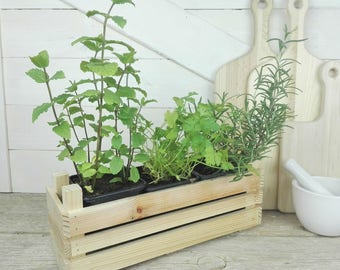 Wooden box seedlings for fragrant plants