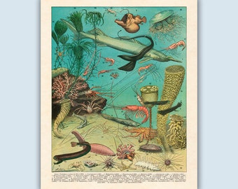 Ocean Decor, Sea Life Wall Art, Nautical Print, Beach House Art, Coastal Artwork, Sea Life Print, Ocean Art, Beach Decor, Coastal Decor