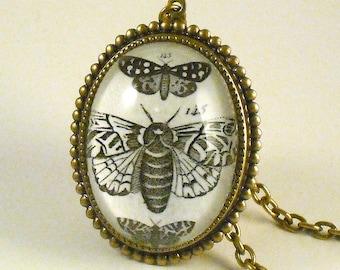 Moths Moths Moths- vintage inspired brass specimen engraving cameo necklace