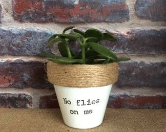 Plant pot gift 'No flies on me' novelty indoor planter- for succulents/ plants/ venus fly trap