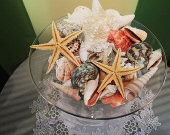 Ocean Treasures - vase filler  sea shells set of about 30 large pieces contains starfish in clear PET box with cap and bowl