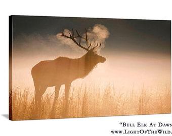 Nature Photography Bull Elk Sunrise - 20x30 Fine Art Canvas - Sunrise, Cataloochee, Great Smoky Mountains, Wildlife Photography