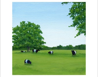 Five Belted Galloways in a Field 6 x 6 Print by SBMathieu