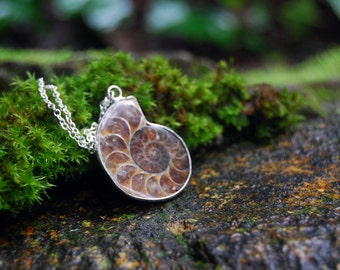 Ammonite Fossil Shell Necklace | Real Ammonite Necklace | Fossilized Shell Necklace | Ammonite Pendant | Nautilus Necklace