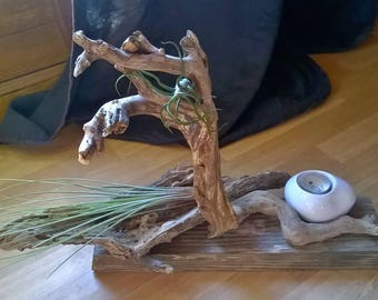 Tillandsia on driftwood and candle