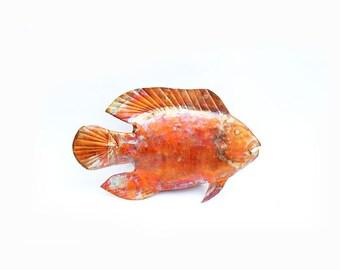 Copper Triple Tail Fish